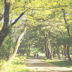 【maricky.omd】さんのInstagramをピンしています。 《森のさんぽ道。 #さんぽ #散歩 #森 #forest #takeawalk #木々 #ファインダー越しの私の世界 #写真撮ってる人と繋がりたい #写真好きな人と繋がりたい #オリンパス #olympus #omdem10 #omd #em10 #ミラーレス一眼》
