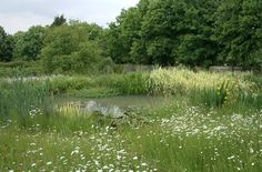 Wildlife Gardening, pond