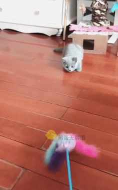[GIF] What kind of positive kitten lives with me