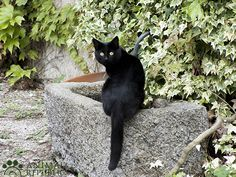 AIDAA avverte: arriva Halloween, proteggiamo i gatti neri   animalrepublic.it