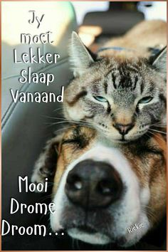 Goeie Nag, Special Quotes, Good Night Quotes, Afrikaans, Husky, Cats, Animals, Boss Wallpaper, Girl Boss