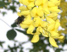 DIY Honig Lippenbalsam selber machen - und 4 andere DIY Schönheitstipps mit Honig.