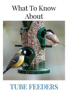 Before you buy a tube feeder, make sure you get all the right information. Here we share what the best tube feeders are, what the best choice of bird food is for a tube feeder, what types of bird species can you expect to visit, and what some common problems are with tube feeders. These can be great bird feeder choice and attract some beautiful birds to your backyard.