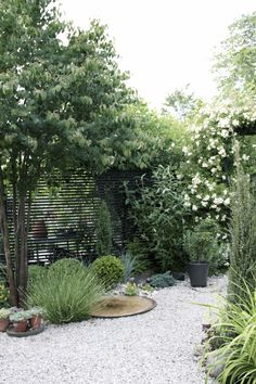 25 Gravel Garden Paths With Pros And Cons - Shelterness Back Gardens, Small Gardens, Outdoor Gardens, Gravel Garden, Garden Paths, Pea Gravel, Gravel Path, Diy Garden, Garden Pond