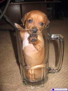 Cup pup
