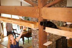 Gatos são mais inteligentes que se pensava, afirma estudo | Virgula