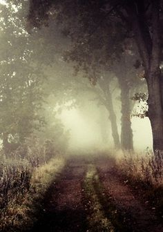 Fog on the path.