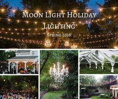 Spring has arrived! Check us out for some awesome outdoor lighting displays as it starts to warm up! Holiday Lights, Holiday Decor, Outdoor Lighting, Moonlight, Event Planning, Christmas Tree, Warm, Spring, Awesome