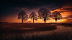 *** TREES *** by Georg Haaser on 500px