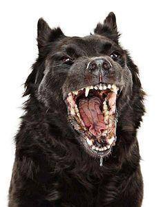 Hungry hound