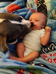 Leia kissing her baby boy ♥ Baby Kiss, Pit Bulls, Smart People, Big Dogs, Kissing, Bullying, Boston Terrier, Baby Boy, Puppies