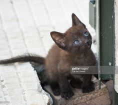 Black kitten with blue eyes at street