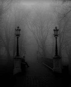 Dark Forest and Fog / Black and White Photography Images Gif, Bing Images, Slytherin Aesthetic, Gothic Aesthetic, Dark Photography, Dark Forest, Misty Forest, Dark Places, Gothic Art