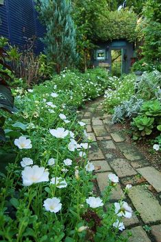 花の小道.jpg