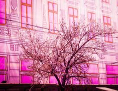 Photo by Elisabeta Vlad Banisters, Cherry Blossom, Travel Photography, Urban, Awesome, Nature, Flowers, Plants, Art