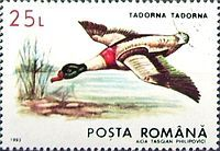 Common Shelduck stamps - mainly images - gallery format Ducks, Birds, Baseball Cards, Stamps, Gallery, Animals, Image, Google, Savages