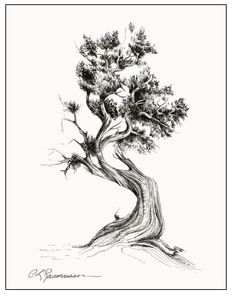 Cedar Tree...I like the strength in this