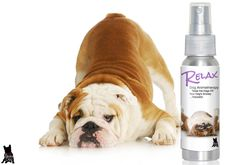 REALX…BULLDOG STRESS BUSTER RELAX DOG AROMATHERAPY TAKES THE EDGE OFF YOUR BULLDOG'S ANXIETY…NATURALLY Your Bulldog probably carries him or herself with swagger. They saunter and strut around as if th