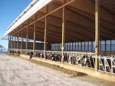 #postframe  #dairy  #engineered