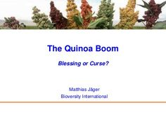 The Quinoa Boom - Blessing or curse? by Bioversity International, via Slideshare