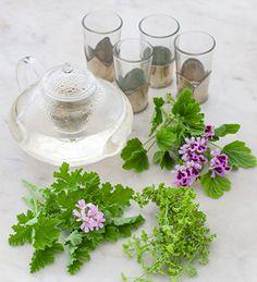 New Scented Leaf Pelargonium Collection