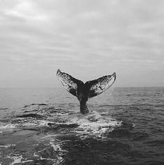 Imagem de whale, sea, and ocean