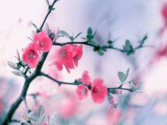 Maravillosas flores con pétalos rosas en las ramas