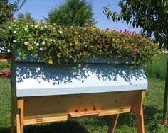 BackYardHive.com - Cathedral Hive with a living roof keeping the hive cool in the heat of summer. This system has many benefits for the bee colony.