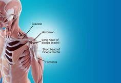 movements of glute muscle internal rotation external