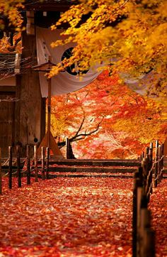 Japanese Landscape, Japanese Architecture, All Nature, Amazing Nature, Aesthetic Japan, Autumn Scenes, Kyoto Japan, Photography Backdrops, Photo Backgrounds