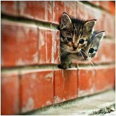 Amazing Kitties