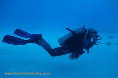 Tony exploring Sha'ab El Erg in the Red Sea Red Sea Diving, Sea Dolphin, Dolphins, Exploring, Abs, Horses, Crunches, Abdominal Muscles, Explore