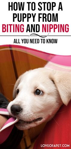 How to Stop a Puppy from Biting and Nipping – All You Need to Know. Puppy biting is typical, expected, and an essential part of puppy behavior. Here is a detailed guide to training your puppy to stop nipping and biting. Puppy Training Classes, Puppy Training Tips, Training Your Dog, Crate Training, Potty Training, Training Pads, Stop Puppy From Biting, Puppy Biting, Funny Videos