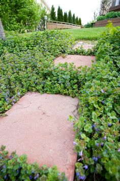 Stepping Stones, Countryside, Outdoor Decor, Flowers, Plants, Home Decor, Gardens, Stair Risers, Decoration Home