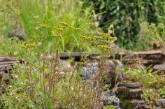 So beautiful  Herbs / http://www.everydaygardening.net/herbs-31/