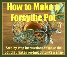 How to Make a Forsythe Pot for Cuttings