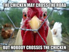 we think that apart from all the fun facts here you also enjoyed the various funny pictures of chickens in this article.chickens are always great with such beautiful characteristics and features that they carry in them. Chicken Quotes, Chicken Signs, Chicken Humor, Funny Chicken Memes, Chicken Coops, Funny Memes, Chicken Fence, Funny Quotes, Funny Videos