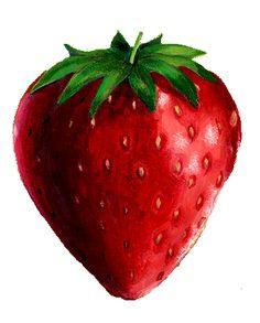 tubes fruits Strawberry Garden, Fruit Art, Food Illustrations, Kids Education, Photoshop, Planting Flowers, Decoupage, Diy And Crafts, Tube