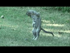 Cute GANGNAM CAT!