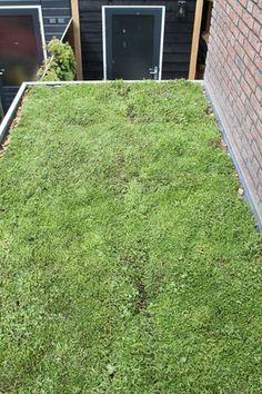 Makkelijk en duurzaam: een groen dak van sedum