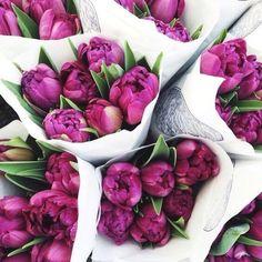 T U L I P S  L A S T  C A LLEstas son nuestras últimas tulipas del año y no queremos que os perdáis nuestro Purple Rain Solo durante 48 horas lo tenemos con 10 de DESCUENTO Código LASTPURPLE  No os lo perdáis!! #purplerain #lastcall #lastchance #mostwanted #tulipas #quierouncolvin #micolvinabril #colvin #flores #flowers