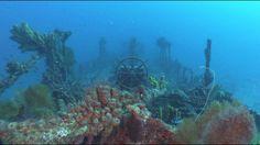 NOUVELLE VIDÉO Full HD ✅ Martinique - Plongée sur la superbe épave du Nahoon ! Plus de vidéos de plongée sous-marine sur → www.Plongeurs.TV