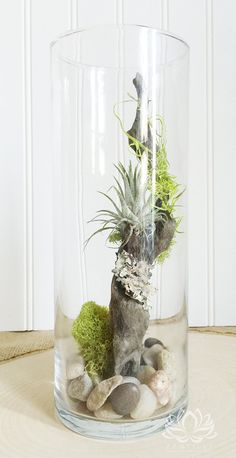 WOODLAND TILLANDSIA VASE by Zentilly© Tillandsia is a genus with hundreds of species of plants in the bromelaid family. They are native to the forests, mountains and deserts of Central and South America, the southern United States and the West Indi Air Plant Terrarium, Garden Terrarium, Succulents Garden, Moss Garden, Succulent Planters, Hanging Planters, Cactus Plants, Air Plant Display, Plant Decor
