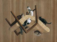 Cats obsession! by Cinta Vidal Agulló