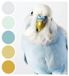 Pastel Feather Studio PARROT TONES - color palette it's time to shine