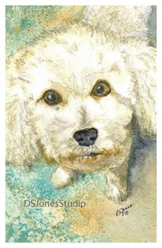 Custom Watercolor Bichon Dog Portrait - Original watercolor painting of your bichon frise or other dog! by DSJonesStudio on Etsy