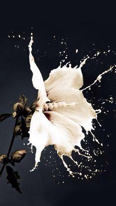 """White as flowers, warm as sunshine, wild as whiskey…."" - Sam Haskins"