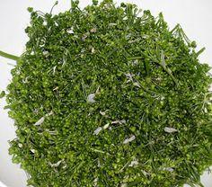 Erdőkóstoló: Medvehagyma kapri a hagyma terméséből Parsley, Herbs, Herb, Medicinal Plants