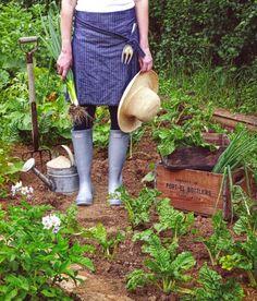 Conseils pour débuter un jardin