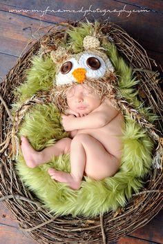 Baby boy owl in nest photo prop